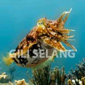 Gili Selang Dive sites
