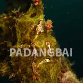 Padanbai Dive Sites