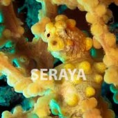 Seraya Dive Sites