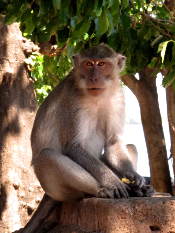 monkey-lempuyang-temple-forest-balidiversity