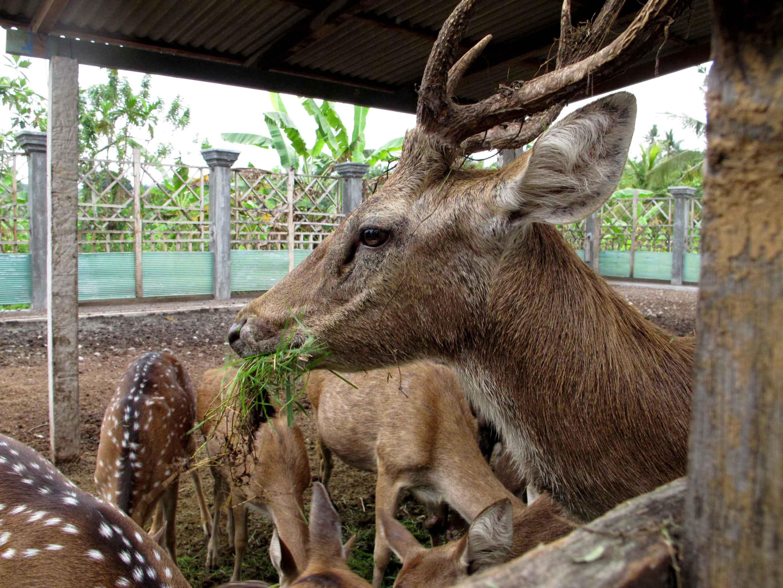 ujung-palace-animals-king-castle-balidiversity
